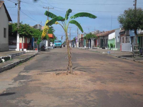 Plantio nas Ruas de Gonçalves Dias